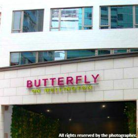butterfly-on-wellington_meitu_17_meitu_24-280x280